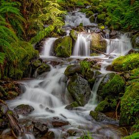Swedish Stream - 3 by Richard Duerksen - Landscapes Waterscapes ( oregon, roadside stream, stream, waterfall, santiam, new sweden, river,  )