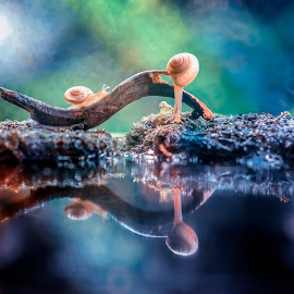 Two Snail Reflection in Water Bokeh by Sulistyo Aji - Uncategorized All Uncategorized ( indonesian, macro, snail, close up, reflection, color, reflections, colorfull, reflecting, macrodaily, insects, indonesia, two, colors, reflective, closeup, macrophotography, close ups, macro photography, insect, bokeh, macro art, macro shot, colorful )