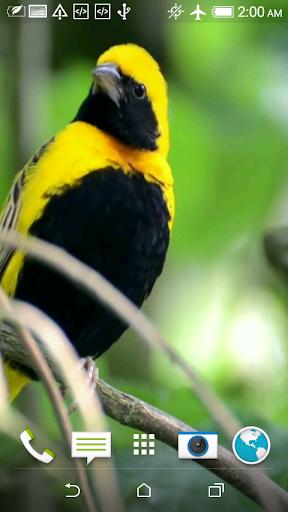 鳥3Dビデオライブ壁紙