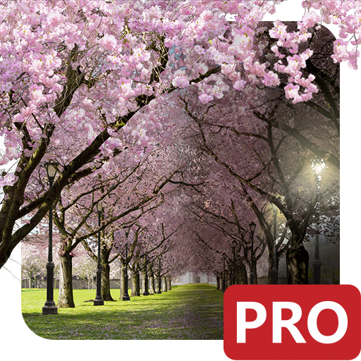 Spring Cherry Blossom Live Wallpaper