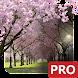 春の桜のライブ壁紙 Cherry Blossom Live Wallpaper - Androidアプリ