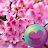 Sakura Cherry Blossoms HD Wall logo
