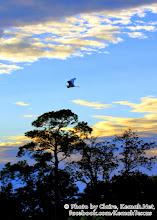 Photo: The Flyway in  Kemah, TX!