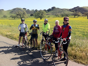"""Photo: """"The Girls"""" and Mike regrouping on Figueroa Mountain Road"""