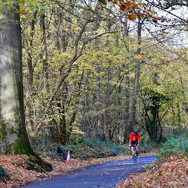 Cycling Fantasy by Victoria Eversole - Sports & Fitness Cycling ( travel photography, northamptonshire, autumn colours, cycling )