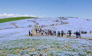 Photo: People, Not Ants  Here's another from the Hitachi Seaside Park that I took last May. Maybe it's all the snow we've had, but the last couple of days I've been going back over these photos and longing for Spring...  Blog post: http://lestaylorphoto.com/a-day-at-hitachi-seaside-park/  #traveltuesday #japan