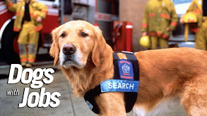 Dogs With Jobs thumbnail