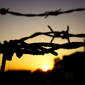 Dreaming of liberty by Prerna  R - Artistic Objects Other Objects ( freedom, sunset, silhouette, barb wire, sunrise )