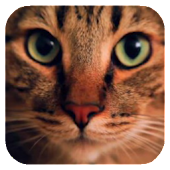 Wonderful Cat Live Wallpaper