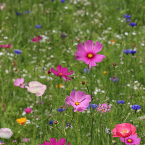 by Dave Hollub - Flowers Flowers in the Wild (  )