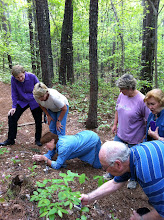 Photo: Master Gardeners Examining a Lady Slipper