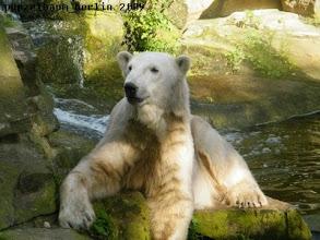 Photo: Knut hat es sich vor dem Pool bequem gemacht ;-)