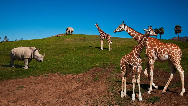 Watch The Zoo: San Diego live