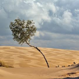 NationalPark Leba by Mirek. Mirek. - Uncategorized All Uncategorized ( dune, leba poland )
