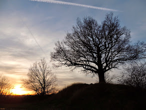 Photo: evening  #SilhouettesOnThursday by +Siddharth Sirohi #SilhouetteThursday  #Trees  #sunset