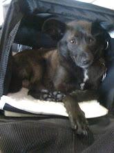 Photo: Malia at LAX, waiting at the terminal