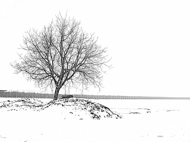 Generale inverno di Furlissima