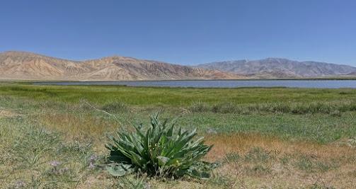 Die Seen sind Heimat zahlreicher Wasser- und Watvögel.
