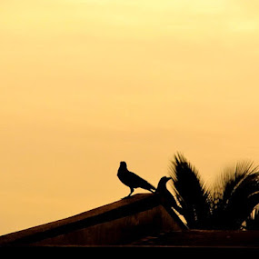 At the end ! by Satabdi Datta - Backgrounds Nature (  )