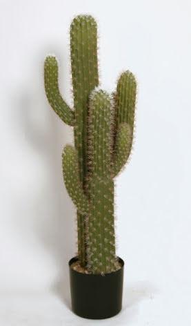 Cactus - 109cm