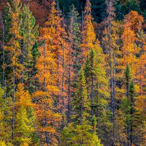 by Matthew Goldsworthy - Landscapes Forests ( matt )