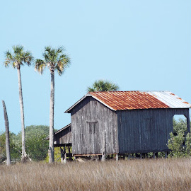 Swamp Shack by Donna Probasco - Buildings & Architecture Decaying & Abandoned (  )