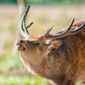 a Deer by M. Andersen - Animals Other Mammals (  )