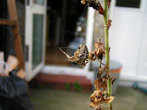Photo: I, Spider