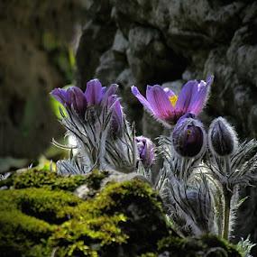 *** by Mirela Korolija - Nature Up Close Flowers - 2011-2013