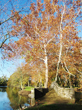 Photo: Pale trees with autumn leaves at the end of a bridge at Eastwood Park in Dayton, Ohio.