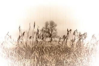 Photo: Wystawa Milczace Drzew Rozmowy fot. DeKaDeEs / Kroniki Poznania © ®