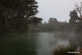 Photo: (Year 3) Day 23 - Bridge in Golden Gate Park With the Fog Swirling Around