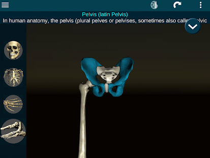 Bones Human 3D (anatomy)- screenshot thumbnail