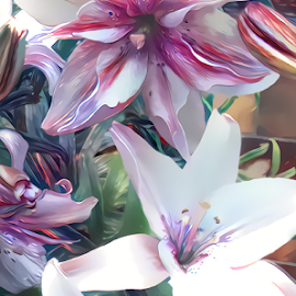 Lilies 8 by Cassy 67 - Digital Art Things