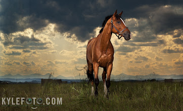 "Photo: This horse ""Ollie"" would gallop into the sunset if someone wasn't holding him, I took a second photo of the scene after the horse and the person holding him walked out of the scene and photoshopped him out, I left his pulled halter on as evidence of this for the keen eyed ;)"