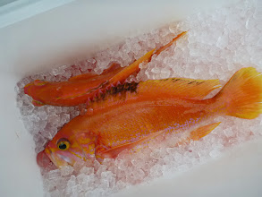 Photo: 魚が釣れずに・・・