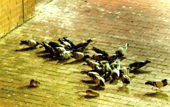 Photo: In Passing - Ratten und Tauben in der City