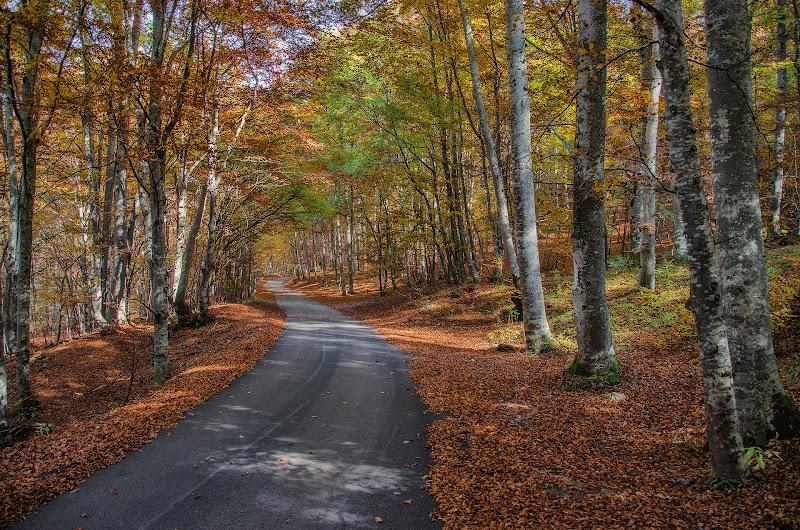 La strada nel bosco di Moreno re