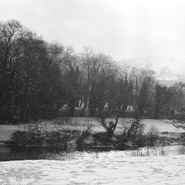 A Blizzard on the Conwy by DJ Cockburn - Black & White Landscapes ( stream, uk, monochrome, betws-y-coed, snowstorm, black and white, wales, afon conwy, winterscape, llanrwst, forest, conwy, landscape, grayscale, winter, tree, cold, nature, river conwy, snow, snowscape, snowdonia, blizzard, britain )