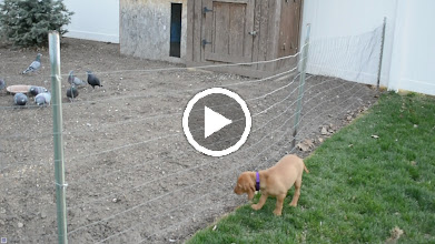 Video: I want the birds
