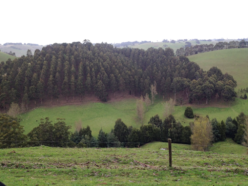 57ha Livestock and Agroforestry Farm South Gippsland's Strzelecki Ranges, south-east of Melbourne