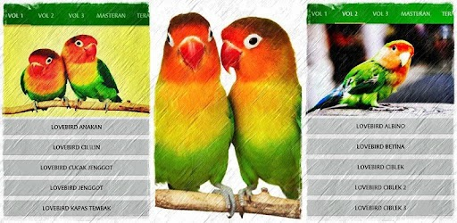 Suara Burung Lovebird Juara - MP3 Offline APK 0