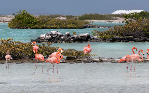 bonaire-flock-of-flamingos.jpg - You're more than likely to see flocks of flamingos on your visit to Bonaire.