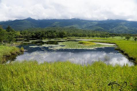 睡蓮が浮かぶ湖面
