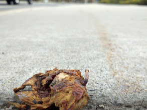 Photo: This fruit/thing is long past its prime, but what made it catch my eye was the streak on the sidewalk behind it.. no doubt left as someone dragged it across the cement with their foot.