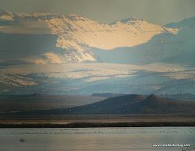 Photo: Snow Geese on Malheur Lake, Steens Mtn backdrop