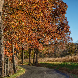 Fall around the bend by Tracy Gruver - Novices Only Landscapes ( orange, fall, rural )