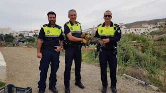 Policía LocalenLos Gallardos, reconocido por haber rescatado unáguila perdiceray por llevar más de 30 años de servicio público