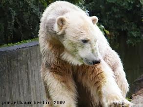 Photo: Knut mit gruenen Sommersprossen :-)
