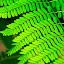 Pattern in Green by Rajib Chatterjee - Nature Up Close Other plants